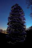 Christmas Tree at Dusk