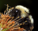 Bee Closer