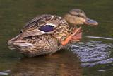 Friendly Duck!