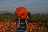 candid in the pumpkin patch.jpg