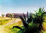 Plants near the Pyramids