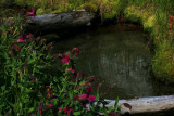 Mossy Pool