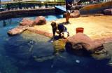 Coral_World_Eilat.jpg