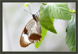 Butterflies: up close & personal. . .