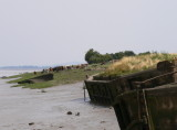 concrete barges on the Severn at Purton, probably wartime when steel was in short supply