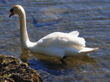 bit of swanning about & you can see how clear the water is for swimming