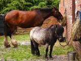 the working horses lunchbreak