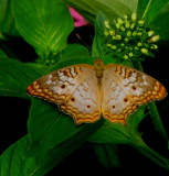 Brookside Gardens Butterfly House