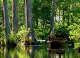 Cypress Gardens - Moncks Corner, South Carolina