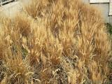 2006-12-19 Dried