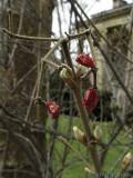 2007-03-26 Dried