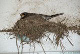 2007-05-16* Nesting