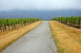 Vineyard, Vrsac
