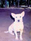 ifugao dog.jpg