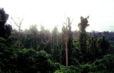 Bat Kingdom in Subic