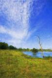 Wind & Grass