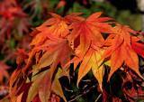 Autumn Colors - 1  *