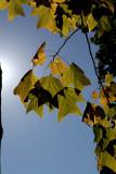 Autumn Colors - 2  *