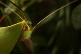 A leaf in the dark *