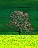 Impressionist Field with a Tree