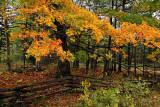 Fall In Door County 2007