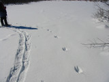 Path of Fisher in Deep Snow