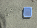 Deer Mouse Track with Scale