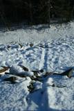 Otter Slide