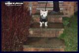 06122006 setting off on Cat Patrol