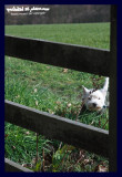 peeping through the fence