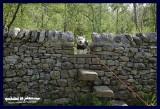 21052007 climbing the wall
