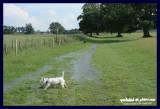 16062007 a strange flow of water