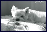 05072007 sleepy... or NOT!!