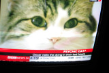 a still of our pbase friend Joan's nursing home cat on telly!
