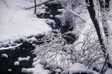 snowybrook01-2.jpg