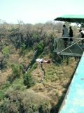1148 7th October 06 Stephen Bungeeing from Victoria Falls Bridge Livingstone.JPG