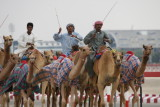 Training the Racing Camels Dubai.JPG