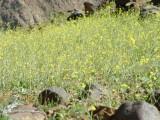 Desert Flowers 2.JPG