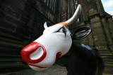 Edinburgh Cow.JPG