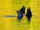 Synchronized Swim Team