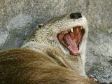Look Ma...No  Cavities!