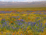 Field of Multi-Colored Wildflowers