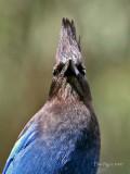 Avian Conehead