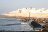 the seagull of essa