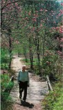 Coming from his magnolia garden, behind their house in Hendersonville. May 2000.