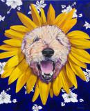 Jake sunflower.jpg