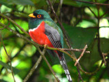 Trogons to Woodpeckers