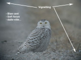 Digiscoping-Post Processing
