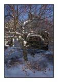 061208 First Snow
