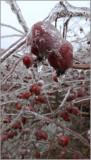 Iced070115.jpg